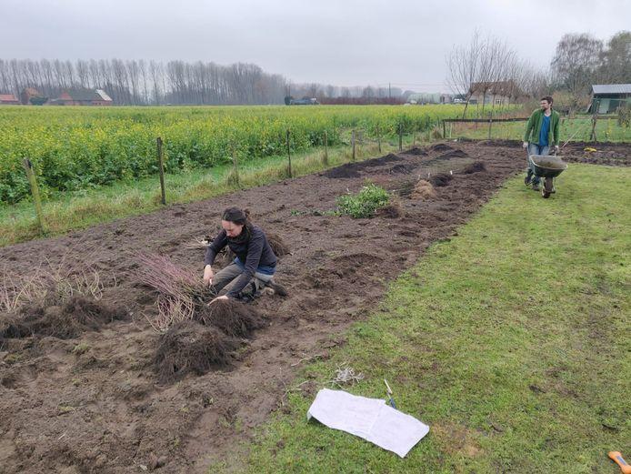 Het voedselbos van Pomona in Meerdonk kreeg de voorbije maanden al goed vorm.