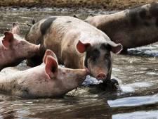 Extra geld voor Limburgse boeren die over willen naar kringlooplandbouw
