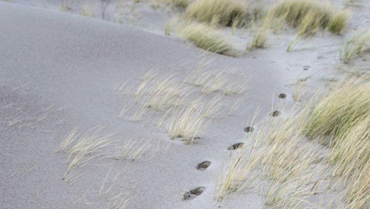 'De Schoorlse duinbossen moeten intact blijven en geen speelobject worden voor een paar mensen die zo nodig stuivende duinen willen creëren.' Beeld anp