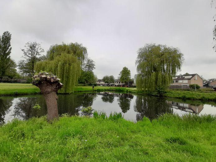 De bomen langs de vijver aan de Angerloseweg in Doesburg zijn geknot.