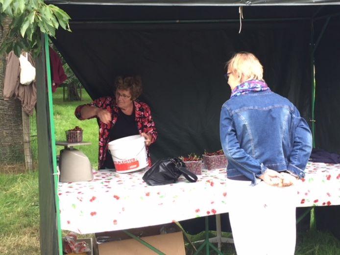Vanuit de kraam aan de Patrijsweg worden de rijpe kersen uit Dn Ujese Boogerd verkocht.