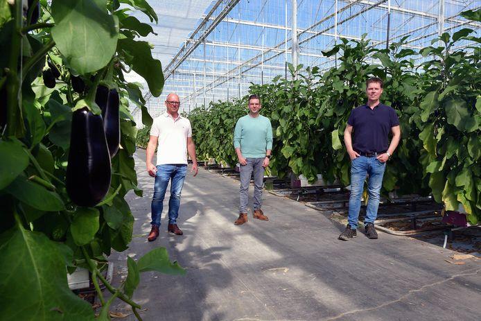Warmteproject Osiris moet warmte en CO2 van Suez naar de kassen in Steenbergen en AFC Prinsenland leiden. Van links naar rechts de initiatiefnemers Martin Bouwman, Ard-Jan Verpaalen en Jan van Marrewijk.