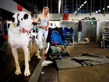 Vliegmaatschappij na dode hond in bagagerek opnieuw in de fout