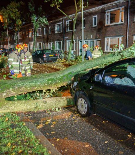 Stormschade in regio Utrecht: omgewaaide bomen, files en geen treinverkeer Utrecht-Amersfoort