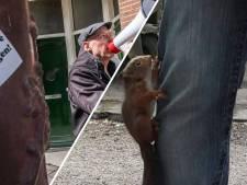 Nieuws gemist? Beleggers kopen straten vol sociale huur op en jonge eekhoorn klimt in broek voor hulp