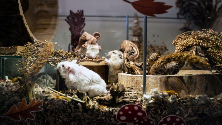 Emiel en Alyce hebben vijf hamsters verdeeld over drie woonunits. Beeld Reyer Boxem