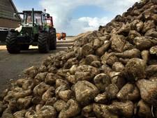 De gewassen zitten in de stress, maar akkerbouwers zijn blij met de warmte