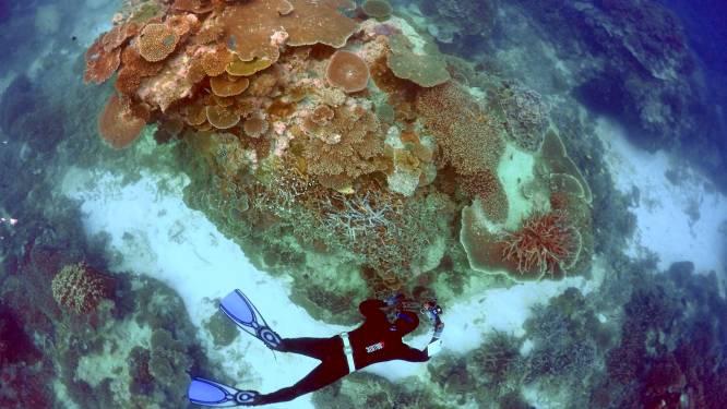 """""""Uitzonderlijk groot"""" koraal van 400 jaar oud ontdekt in Groot Barrièrerif"""