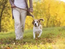 Hond mag op meer plekken los lopen in Lochem