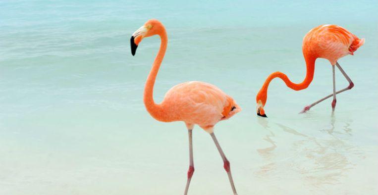Flamingo In Huis : Blue flamingo het huis van culturen en sociale samenhang van
