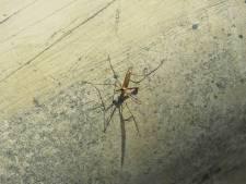 """Un couple de Belges décède de la malaria chez lui: """"Un moustique entré dans le pays via l'aéroport"""""""