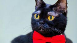 Cara Delevingne heeft een copycat: deze kat is razend populair op Instagram door ... haar perfecte wenkbrauwen