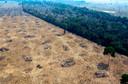 Ontbossing voor de aanleg van sojaplantages in Brazilië.