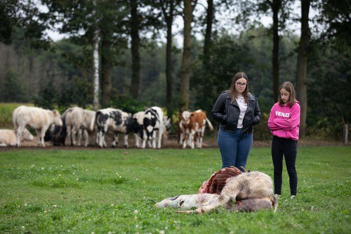 Lindsey (links) en Lotte Geusens staan verslagen bij de resten van het gedode dier.