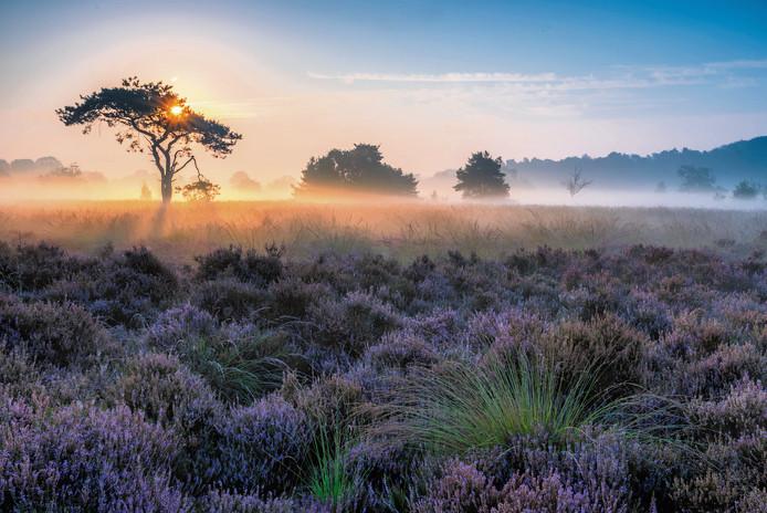 Sfeerfoto van de Oude Buisse Heide waar Edwin Brosens zijn bijzondere sluipwesp aantrof in de insectenfles bij een insectenvangnet.