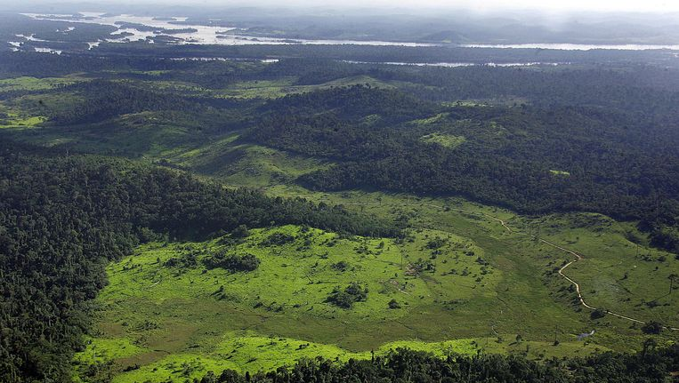 WWF heeft grote twijfels bij de belofte van papierproductent APP om niet langer aan ontbossing te doen. Beeld AFP