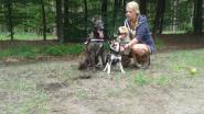 """Ben en Ilse zoeken al twee weken naar hondje Kuma: """"Beloning voor de gouden tip"""""""