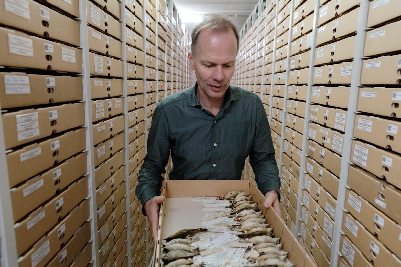 Collectiebeheerder Steven van der Mije met een doosje rietzangers met stokje, bedoeld om ze zonder aanraken te kunnen oppakken.