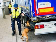 Wildslapers verzieken de sfeer in Hoek van Holland