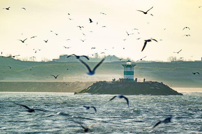 Meeuwen aan de kust bij Den Haag, foto ter illustratie.