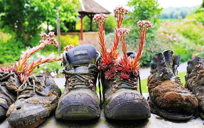 'Gooi geen oude schoenen weg voor je een paar nieuwe hebt ... Maar om ze zo lang te bewaren tot er planten uitgroeien?'