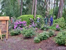 Hervormde begraafplaats Haaksbergen weer helemaal opgeleefd, althans de planten