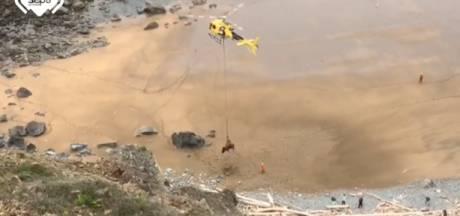 Un taureau de 800 kg héliporté après être tombé d'une falaise