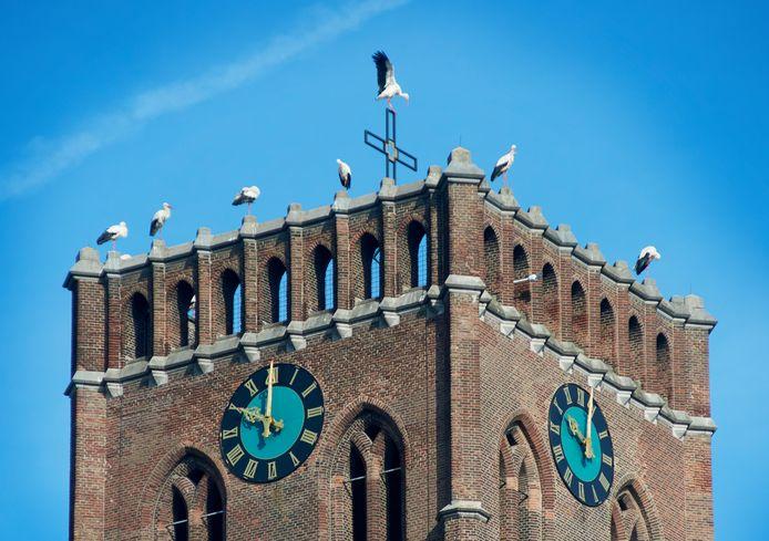 De ooievaars op de Grote kerk in Oss.