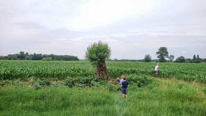 """""""Extra bos voor noordelijk stadsdeel"""": stad start procedure voor verankering Stadsrandbos Noord"""