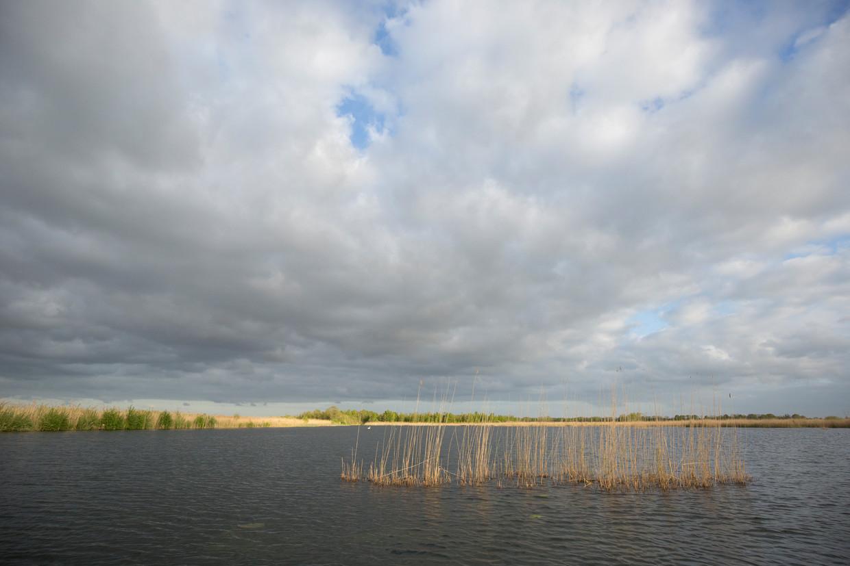 Laagveenmoeras Naardermeer