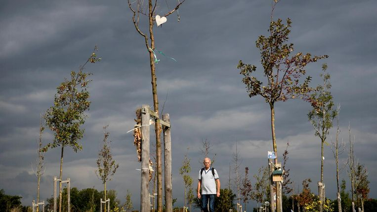 In september waren 80 van de 298 bomen in het bos gestorven. Beeld anp