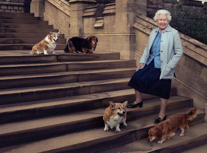 La reine Elizabeth II photographiée en 2016 avec ses corgis. Aujourd'hui, seul son chien Candy est toujours en vie.