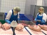 Slachterij Helmond dicht: 1 op de 6 geteste werknemers besmet