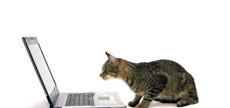 Kattengedragstherapeuten