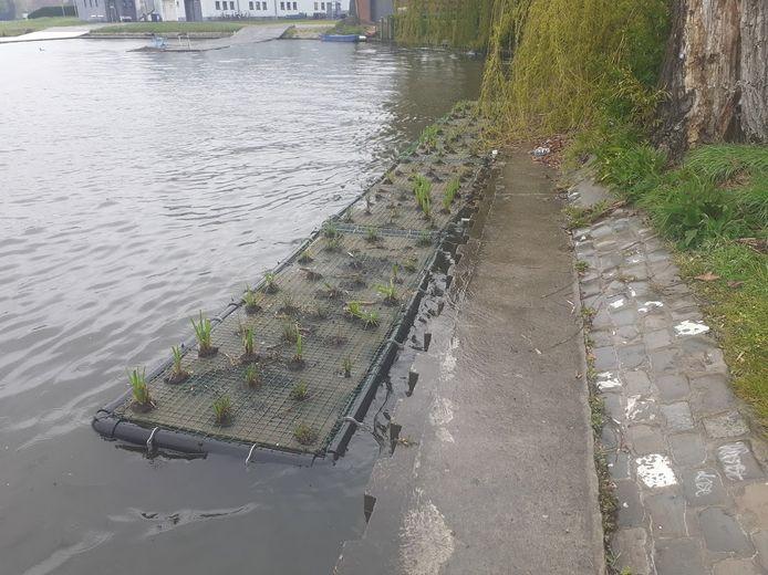 Het testproject: een groeneiland aan de Watersportbaan. Het groen moet wel nog groeien.
