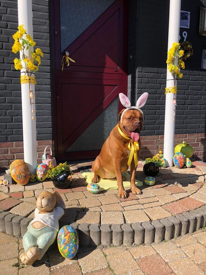 Ter ere van Pasen laat hond Isa haar maar al te graag verkleden in een gepaste outfit