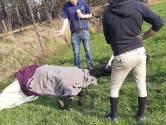 Paarden afgemaakt na ernstige verwondingen door Peelbrand