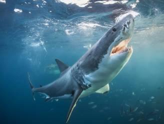 70 procent minder haaien en roggen sinds 1970