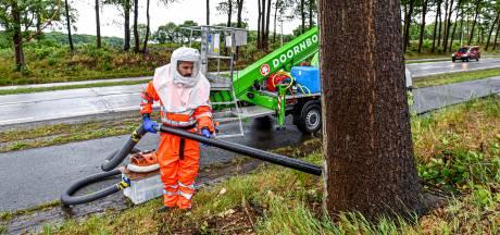 Bergen op Zoom in actie tegen eikenprocessierups