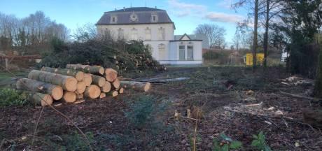 'Boom gaat in Oisterwijk te makkelijk om', maar compensatiebos lijkt er niet in te zitten