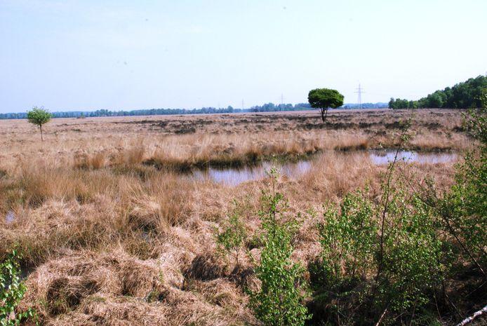 In het Wierdense Veld komt momenteel nog slechts 125 vierkante meter hoogveen voor.