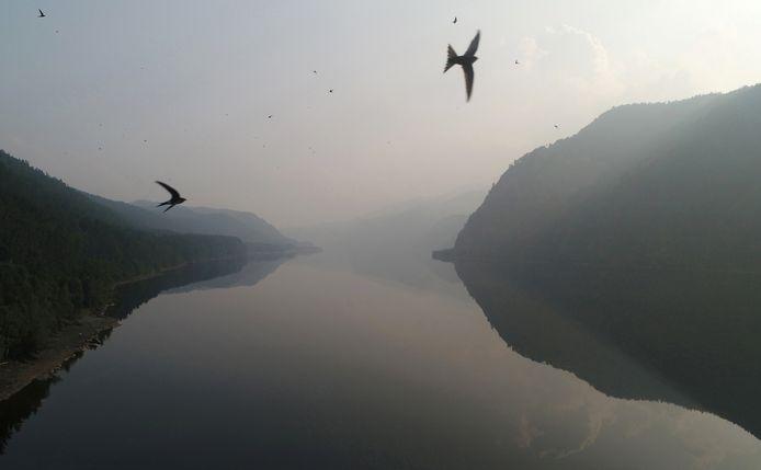 Vogels in de rook door de branden op de Siberische taiga.