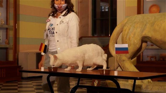 Deze (Russische) kat weet het zeker: De Belgen winnen straks tegen Rusland