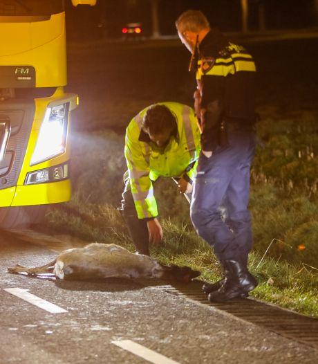 Botsing in buitengebied tussen Klarenbeek en Apeldoorn: ree dood, auto vernield