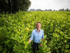Begint de redding van de wereld in Breklenkamp? Hoe zonnekroon de landbouw gaat veranderen