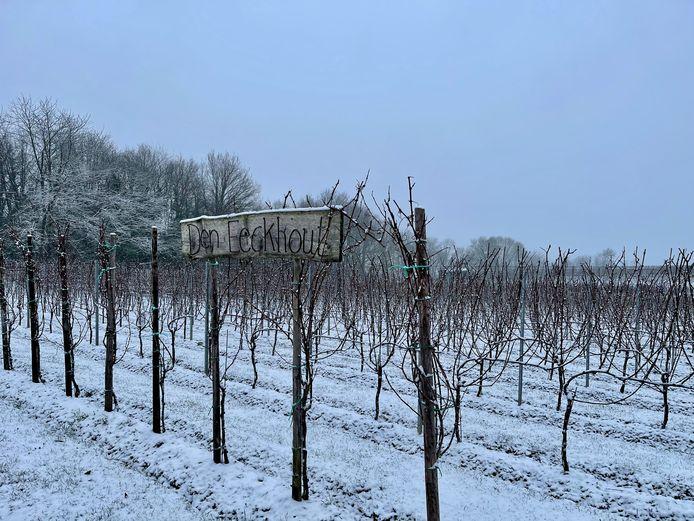 De wijngaarden kregen even een wit jasje.