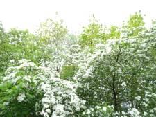 Buren verkoopt stukjes restgrond aan inwoners, te beginnen in Lienden