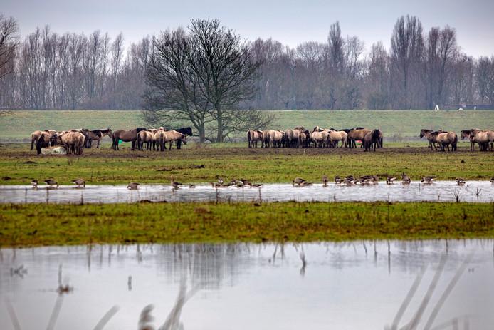 Nederland,  Poederoijen, het hoge water bij Slot Loevestein