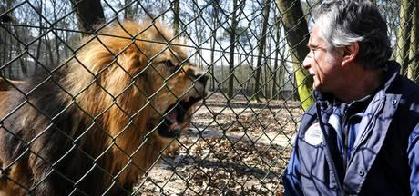 Leeuw doodgebeten door soortgenoot voor ogen bezoekers Burgers' Zoo