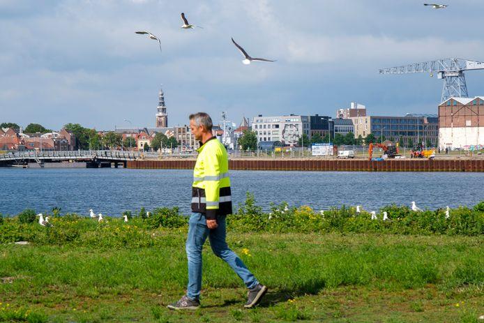 Een opzichter van de gemeente Vlissingen kwam de dag na de melding van de maaibeurt inspecteren. Harde regen en de meeuwen zelf hadden gezorgd dat vrijwel alle kadavers al weg waren.